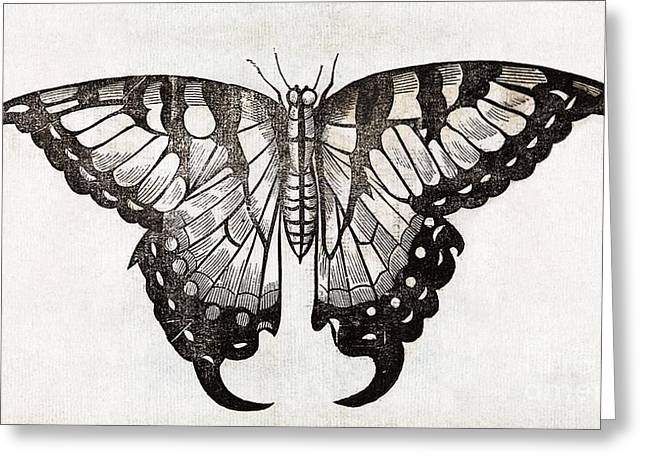 Muffet Greeting Cards - Butterfly, 17th Century Artwork Greeting Card by Middle Temple Library