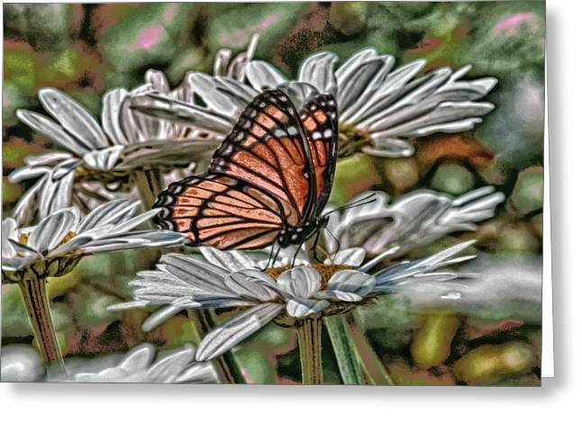 Spicebush Digital Art Greeting Cards - Butterfly Dreams Greeting Card by Melinda Dreyer