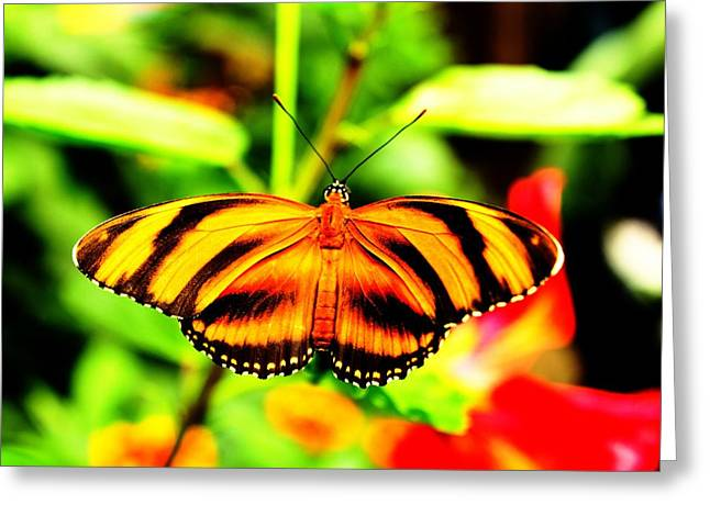 Butterflies Pyrography Greeting Cards - Butterfly Greeting Card by Martin Hristov