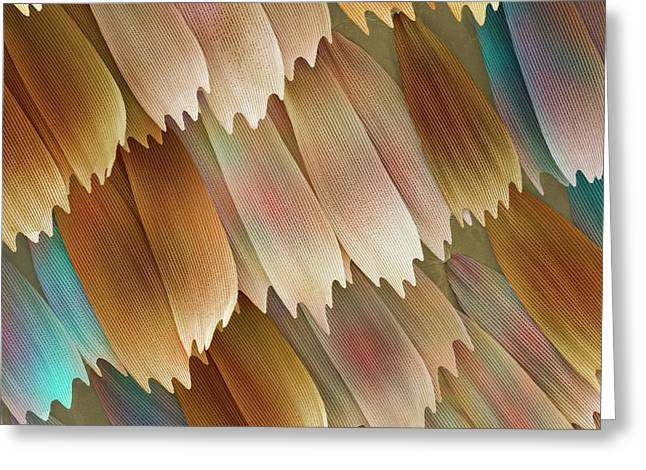 Butterfly Wing Scales Greeting Card by Power And Syred