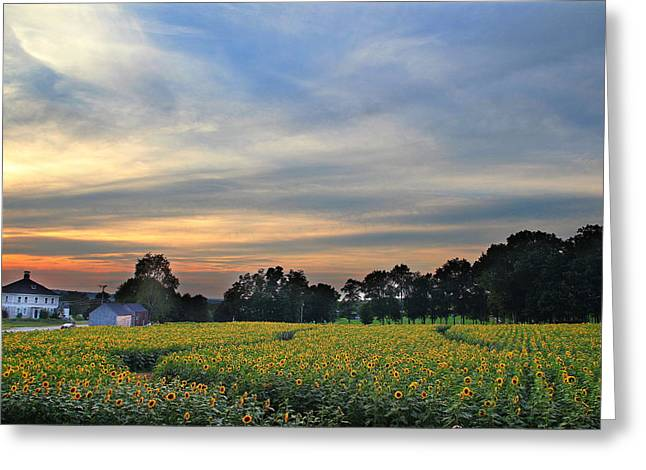 Buttonwood Farm Greeting Card by Andrea Galiffi
