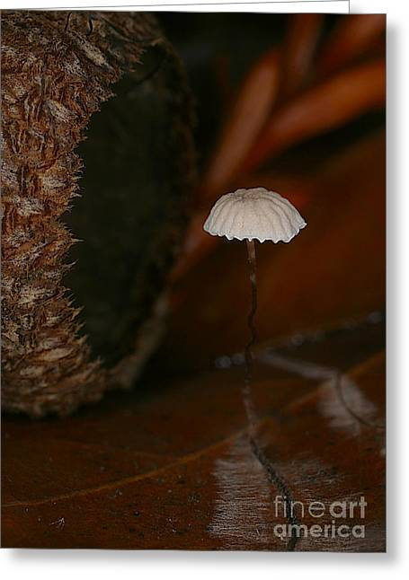 Fungus Greeting Cards - C Ribet Mushroom and Fungi Art Acorn Still Life Greeting Card by C Ribet