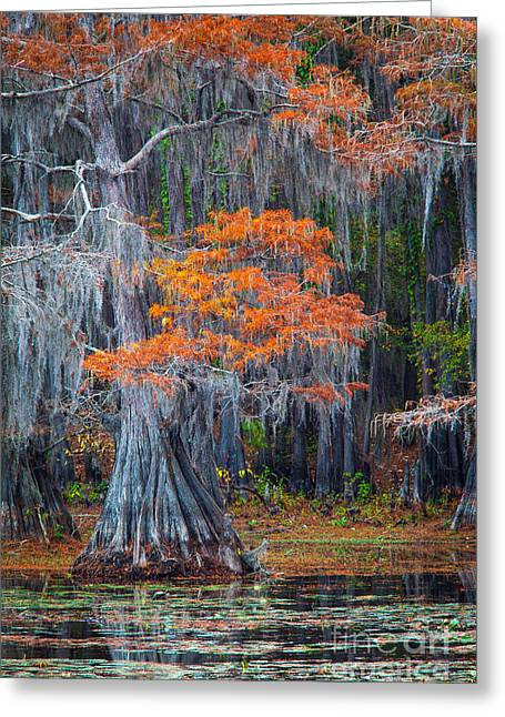 Caddo Lake Autumn Greeting Card by Inge Johnsson
