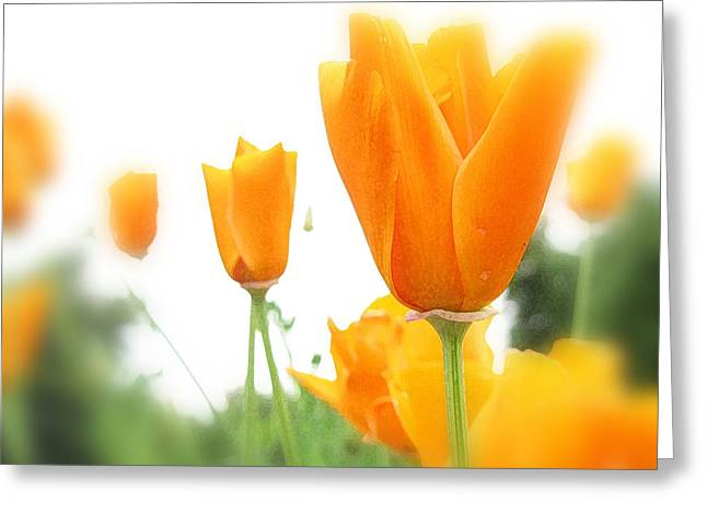 Steve Huang Greeting Cards - California Poppies Greeting Card by Steve Huang