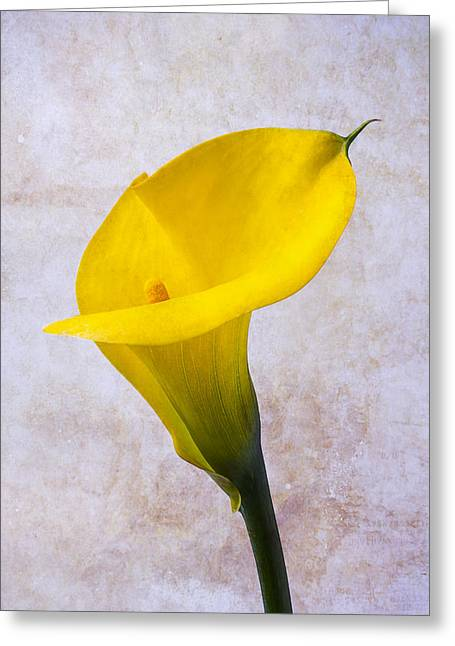 Calla Lily Greeting Cards - Calla lily Beauty Greeting Card by Garry Gay