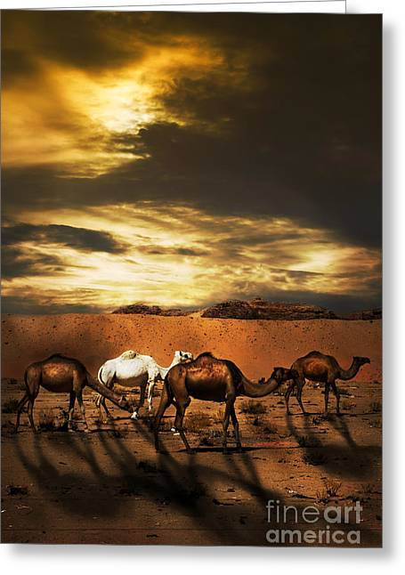 Sand Dunes Pyrography Greeting Cards - Camels Greeting Card by Jelena Jovanovic