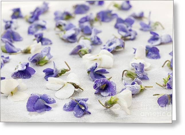 Sugary Greeting Cards - Candied violets Greeting Card by Elena Elisseeva