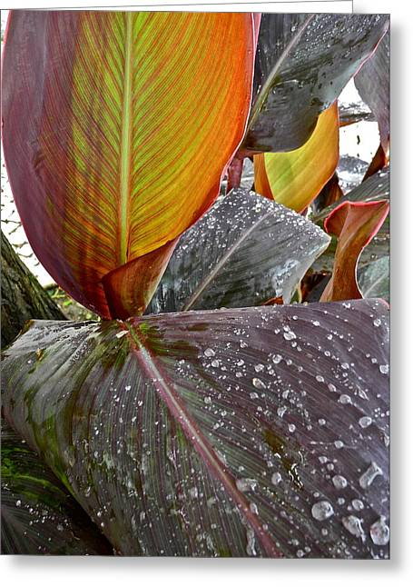 Canna Greeting Cards - Canna Lily I  Greeting Card by Kirsten Giving