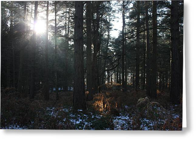 Sledge Training Greeting Cards - Cannock Chase Greeting Card by Jean Walker