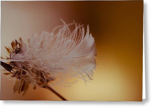 White Feather Greeting Cards - Captured Greeting Card by Shane Holsclaw