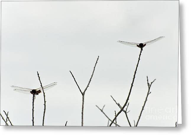 Saddlebag Greeting Cards - Carolina Saddlebags Dragonfly Greeting Card by Mark Newman