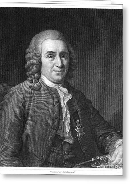Maltese Greeting Cards - Carolus Linnaeus (1707-1778) Greeting Card by Granger