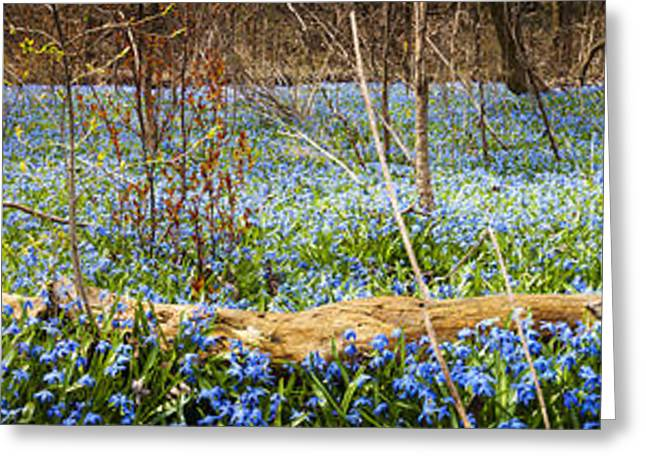 March Greeting Cards - Carpet of blue flowers in spring forest Greeting Card by Elena Elisseeva