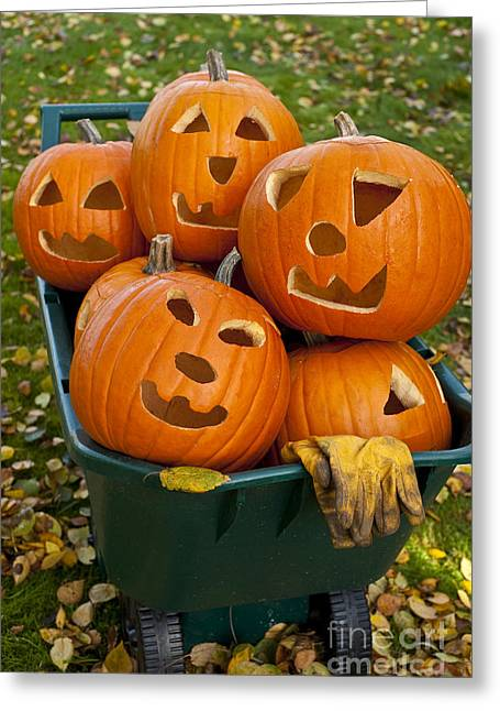 Evening Gloves Greeting Cards - Carved Pumpkins In Wheelbarrow Greeting Card by Jim Corwin