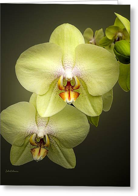 Cascade Of Yellow Orchids Greeting Card by Julie Palencia