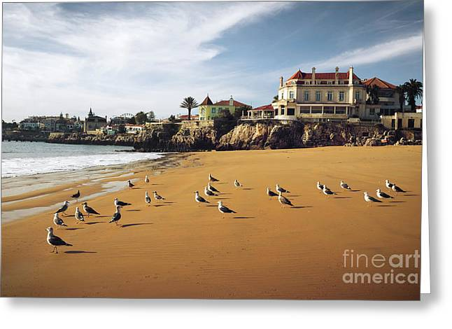 Summer Season Landscapes Greeting Cards - Cascais Seagulls Greeting Card by Carlos Caetano