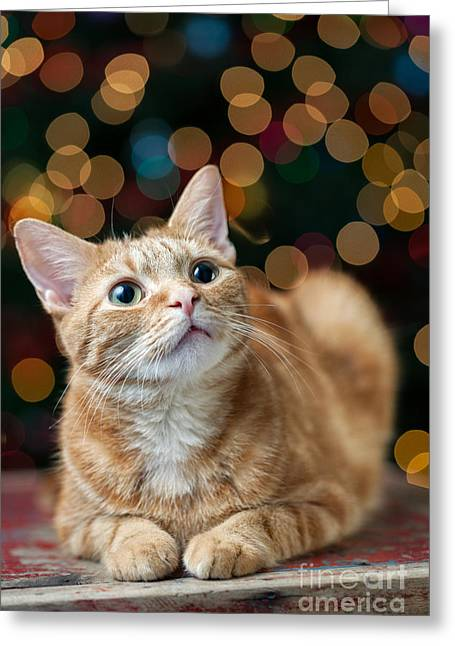 House Pet Greeting Cards - Cat in front of the Christmas Tree Greeting Card by Leslie Banks