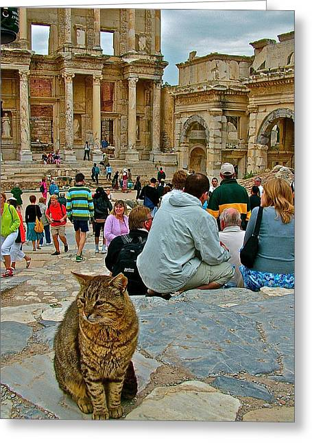 Library Of Celsus Greeting Cards - Cat near Library of Celsus in Ephesus-Turkey Greeting Card by Ruth Hager