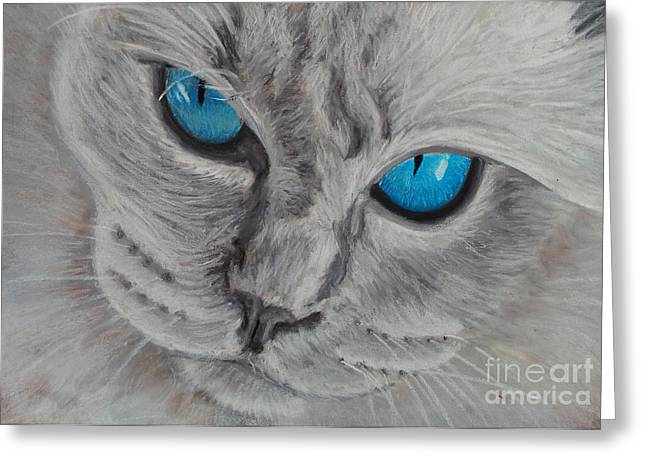Cute Kitten Pastels Greeting Cards - Cats Eyes Greeting Card by Amber Nissen