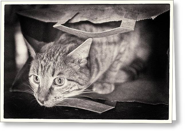 Playing Cards Greeting Cards - Cats In The Bag 1 Greeting Card by Patrick M Lynch