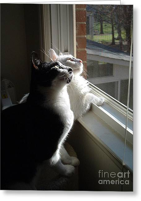 Cat Companions Greeting Cards - Cats In Window Greeting Card by Novastock