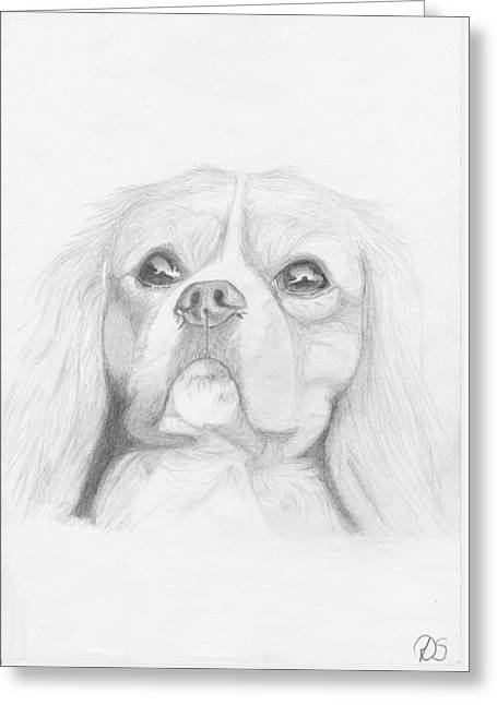 Cavalier Greeting Cards - Cavalier King Charles Spaniel Greeting Card by David Smith