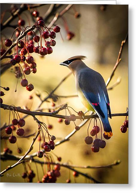 Biology Greeting Cards - Cedar Waxwing Greeting Card by Bob Orsillo