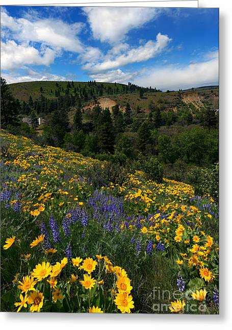 Silo Greeting Cards - Central Washington Spring Greeting Card by Mike Dawson