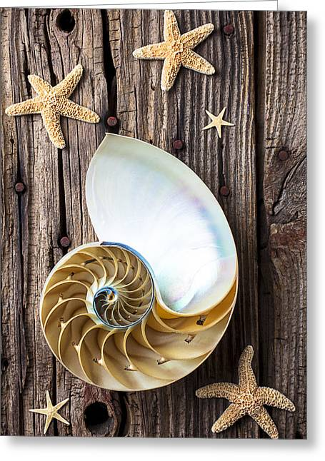 Rusty Nail Greeting Cards - Chambered Nautilus  Greeting Card by Garry Gay