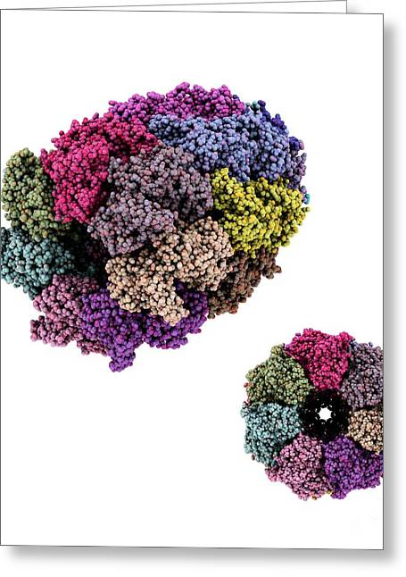 Chaperone Greeting Cards - Chaperone Protein, Molecular Model Greeting Card by Laguna Design