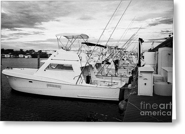 Charters Greeting Cards - Charter Fishing Boats Charter Boat Row City Marina Key West Florida Usa Greeting Card by Joe Fox