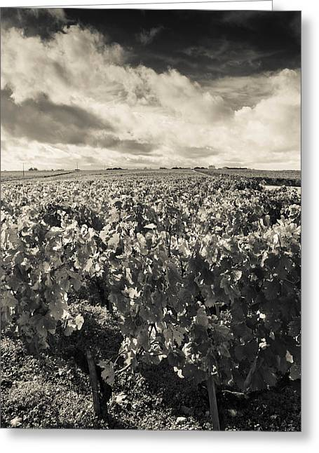 Chateau Greeting Cards - Chateau Lafite Rothschild Vineyards Greeting Card by Panoramic Images
