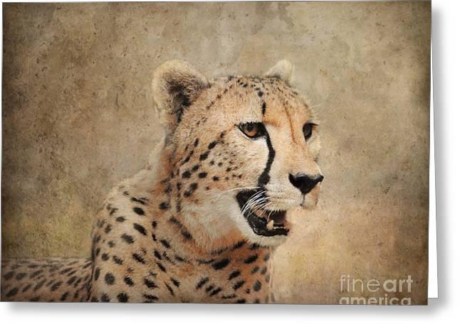 Cheetah Photographs Greeting Cards - Cheetah Greeting Card by Jai Johnson