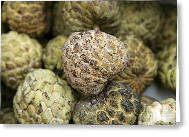 Cherimoya Greeting Cards - Cherimoya Fruit Annona Cherimola Greeting Card by Bjorn Svensson