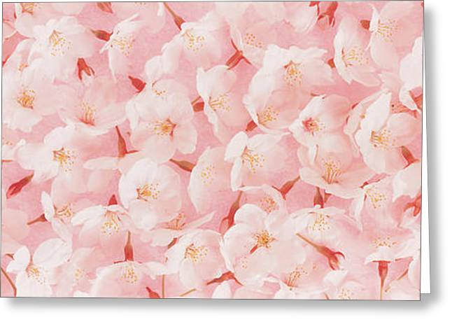 Numerous Greeting Cards - Cherry Blossom Greeting Card by Panoramic Images