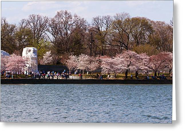 Martin Luther King Jr. Greeting Cards - Cherry Blossom Trees Near Martin Luther Greeting Card by Panoramic Images