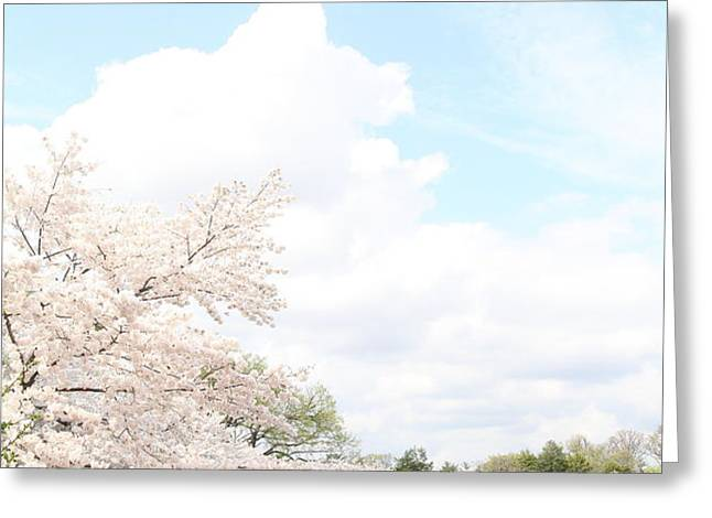 Cherry Blossoms - Washington DC - 01131 Greeting Card by DC Photographer