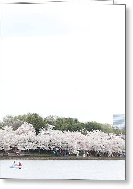 Destination Greeting Cards - Cherry Blossoms - Washington DC - 011312 Greeting Card by DC Photographer