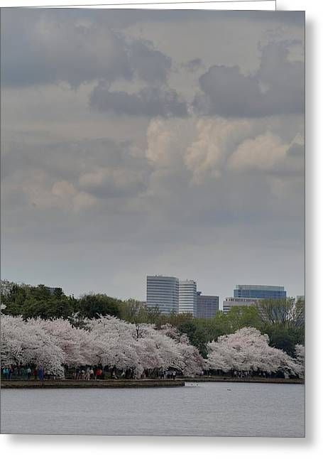 Cherry Blossoms - Washington Dc - 011313 Greeting Card by DC Photographer
