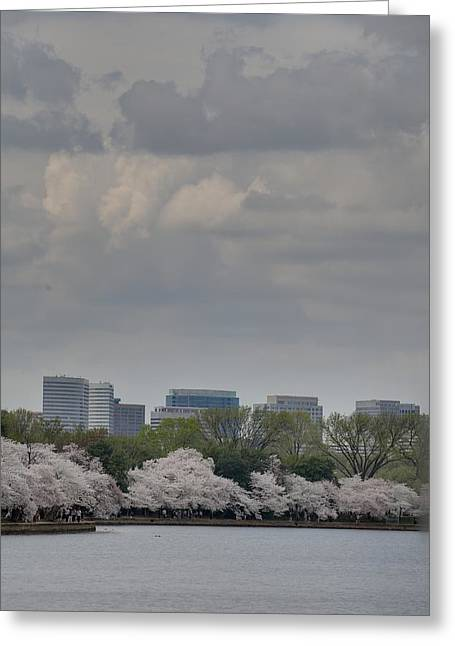 Tidal Greeting Cards - Cherry Blossoms - Washington DC - 011315 Greeting Card by DC Photographer