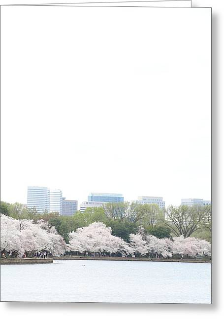 Outdoors Greeting Cards - Cherry Blossoms - Washington DC - 011316 Greeting Card by DC Photographer