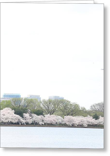 Landscape Photographs Greeting Cards - Cherry Blossoms - Washington DC - 011318 Greeting Card by DC Photographer