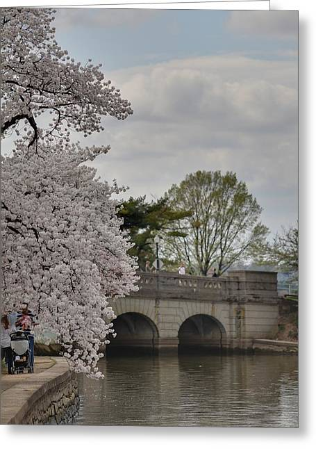 Tidal Greeting Cards - Cherry Blossoms - Washington DC - 011328 Greeting Card by DC Photographer
