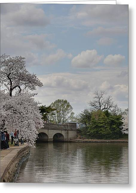 Metropolitan Greeting Cards - Cherry Blossoms - Washington DC - 011329 Greeting Card by DC Photographer