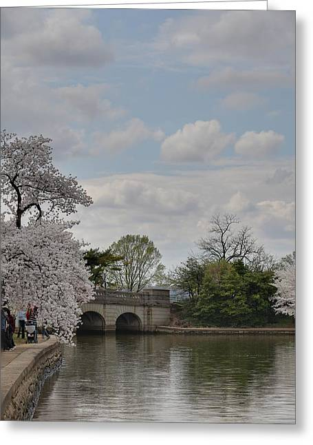 Cherry Greeting Cards - Cherry Blossoms - Washington DC - 011330 Greeting Card by DC Photographer