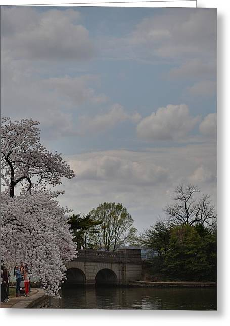 White Photographs Greeting Cards - Cherry Blossoms - Washington DC - 011331 Greeting Card by DC Photographer
