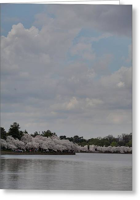 Soft Greeting Cards - Cherry Blossoms - Washington DC - 011332 Greeting Card by DC Photographer