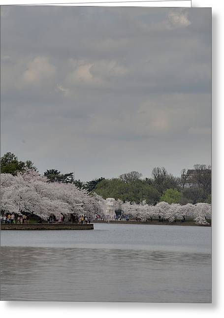 Flowering Greeting Cards - Cherry Blossoms - Washington DC - 011335 Greeting Card by DC Photographer
