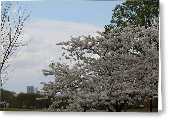 Destination Photographs Greeting Cards - Cherry Blossoms - Washington DC - 011345 Greeting Card by DC Photographer