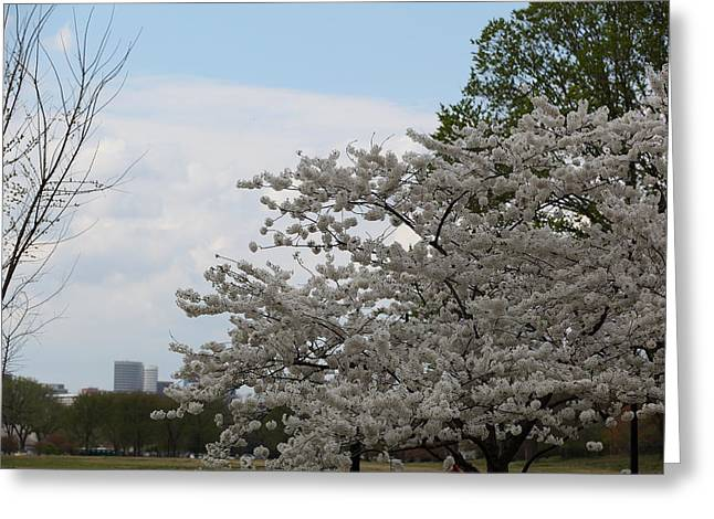 Soft Greeting Cards - Cherry Blossoms - Washington DC - 011346 Greeting Card by DC Photographer
